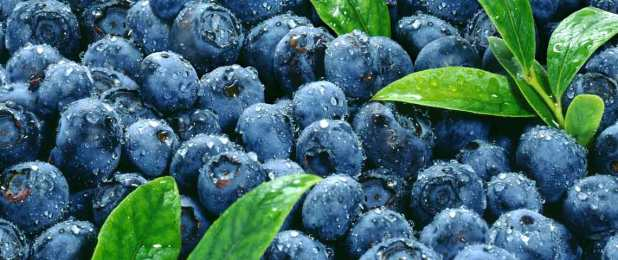 blueberries_header