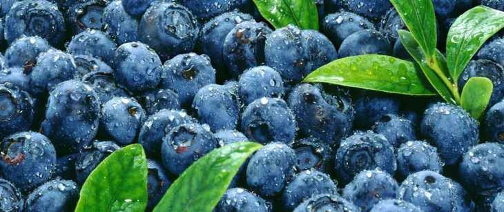 blueberries_header